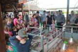 Alföldi Állattenyésztési Napok 2015