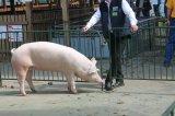 Alföldi Állattenyésztési Napok - Bírálat