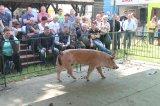 Alföldi Állattenyésztési Napok