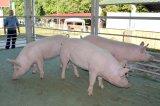 Állattenyésztési Napok, Kaposvár